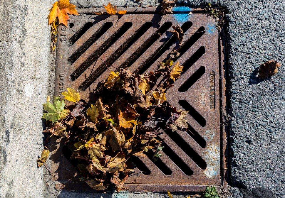 leafpost2.JPG