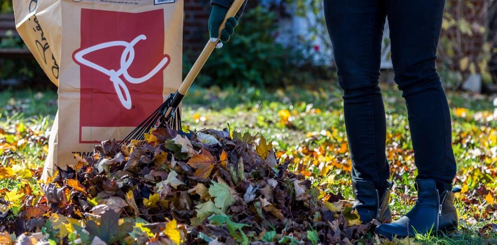 leave-and-rake