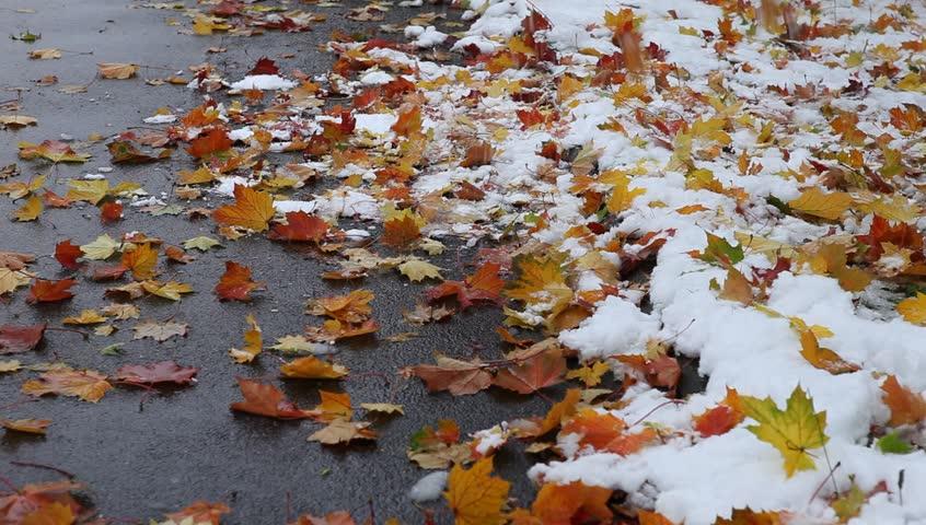 leaves snow.jpg