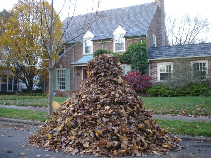pile of leaves.jpg