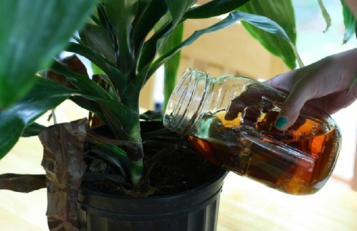 tea juice for plants