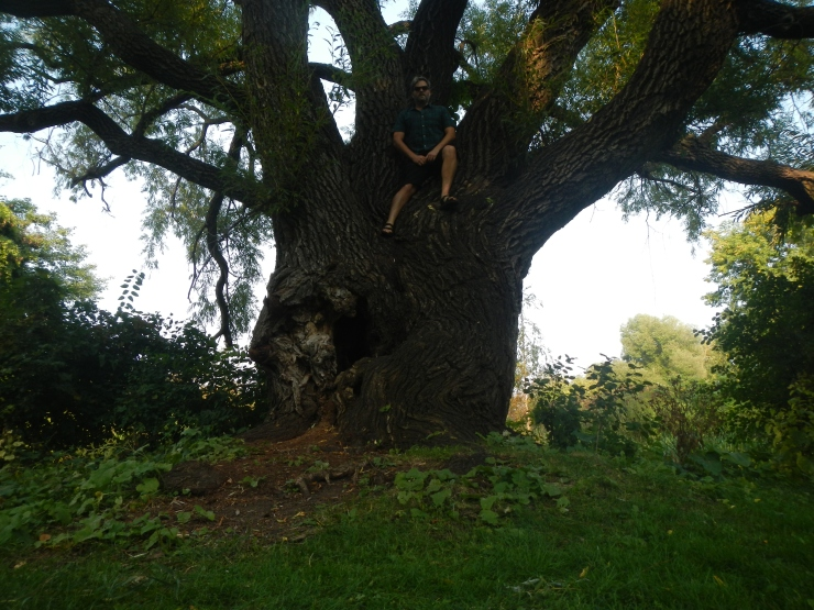 in a willow tree.JPG