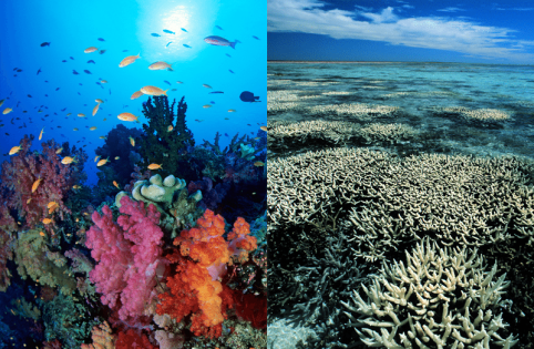 reef-side-by-side-1.png