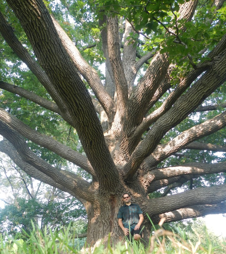 under Bebb's Oak.JPG
