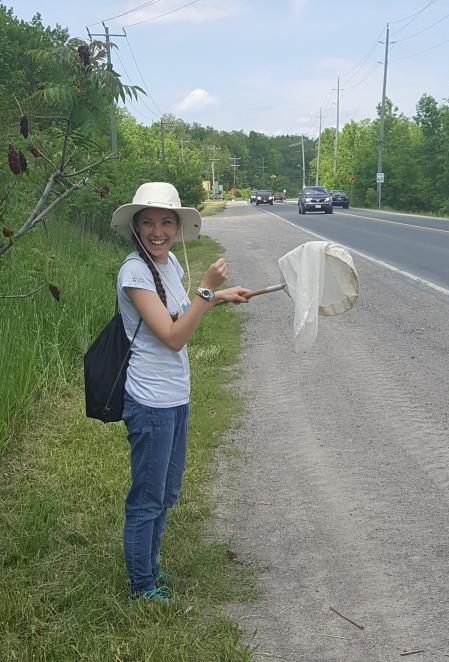 Netting blow flies at the Trent Bioblitz
